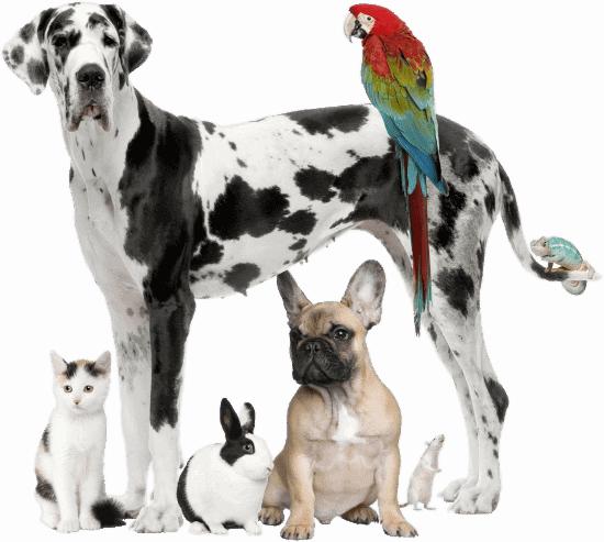 прайс-лист на услуги ветеринарного врача в клинике Багира