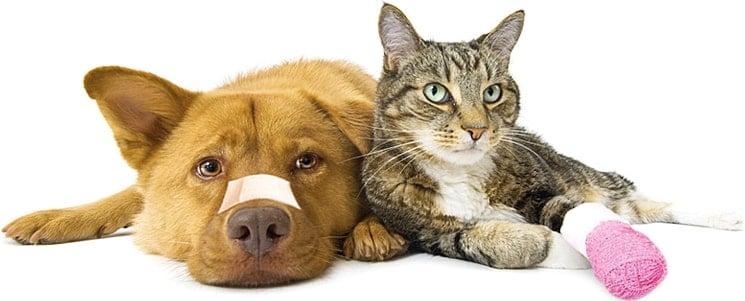 """""""Багира"""" - ветеринарная клиника в Бишкеке"""